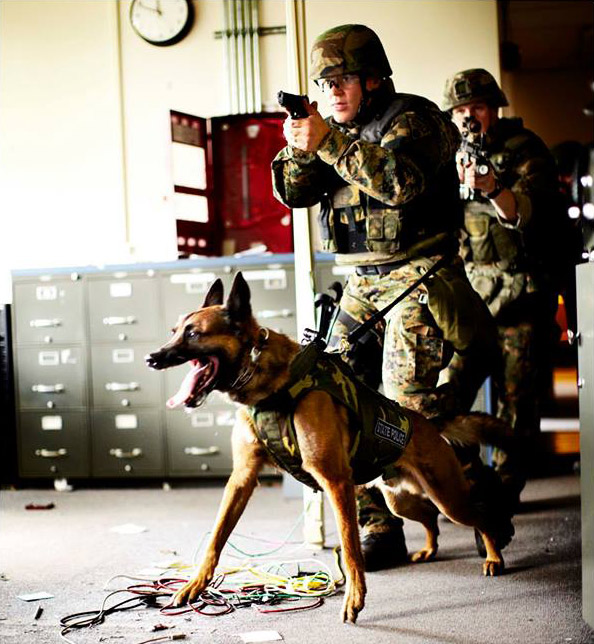 Sonobond's ultrasonic equipment produces watertight enclosures for the ballistic components contained in K9 Storm Patrol-Swat vests for working dogs.  The vests now exceed National Institute of Justice wet-conditioning standards, preventing the bulletproof material inside from becoming damaged or ineffective due to exposure to moisture, and ensuring that dogs have the personal protection comparable to that worn by their human handlers.